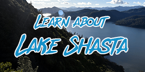 all about lake shasta